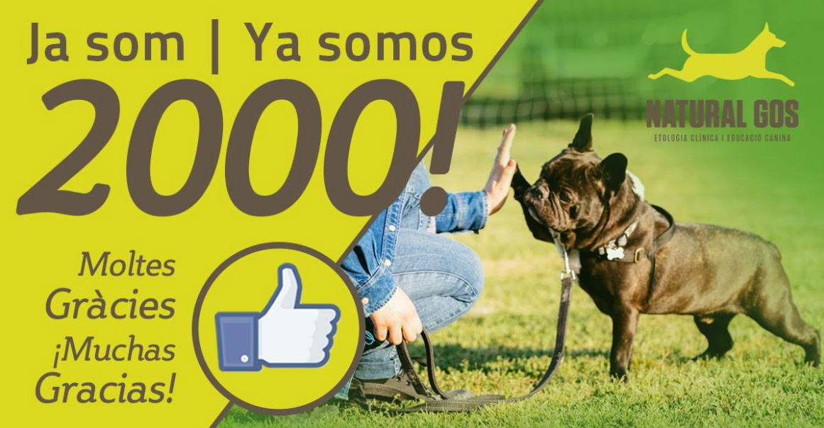 Campaña de marketing online en Facebook